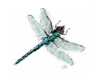 Mounted dragonfly print // dragonfly print // dragonfly gifts // dragonfly art print // dragonfly drawing // dragonfly illustration