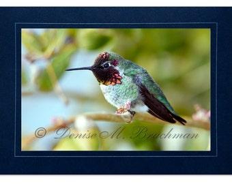 Hummingbird Photo Greeting Card - Bird Card Blank Inside - Blank Hummingbird Note Card - Pink Green Bird Photo - Anna's Hummingbird Card