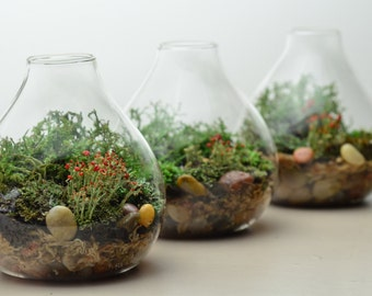 Lichen Terrarium // Forest // Teardrop Vase // Home and Living // Green Gift Ideas // Home Decor// Indoor Garden
