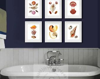 Seashells Bathroom Set of 6 art prints, Beach bathroom Decor, seashell bathroom decor, seashell wall decor, housewarming gift for her