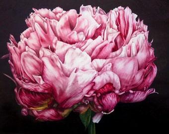 Pink Peony Fine Art Print, Large Botanical Print, Peony Print, Watercolour Painting, Botanical Art, Botanical Illustration, Flower Painting