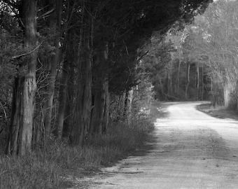 Tree Photography, Black and White Photo, Path Through The Woods, Nature Photography, Wildlife Refuge, Galloway NJ, Wall Art, Home Decor
