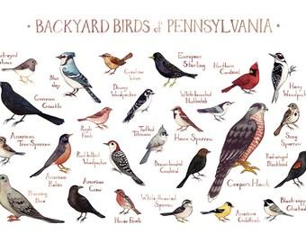 Pennsylvania Backyard Birds Field Guide Art Print / Watercolor Painting /  Wall Art / Nature Print