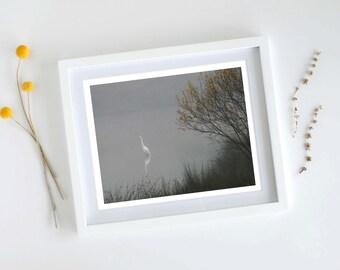 Herron Photo, Fine Art Print, Lone Bird, 8x10, Nature Photography, Grey Yellow, Foggy Morning, Moody Photography, Scandi Inspired, Solitude