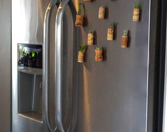Succulents cacti small baby wine cork love plant cactus gift magnet rustic boho green succulent upcycle recycle bridal wedding favor mom day
