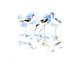 HALF PRICE OFFER!! Avocet water colour sketches, mini originals
