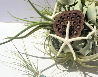 Air Plant Wedding Bouquet and Boutonniere Beach Theme Bridal Bouquet Stem wrapped with pearls plus bonus upcycled wine bottle vase