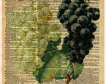 Grape art, red and white grapes, wine lover art, old botanical illustration, nature artwork print on dictionary page
