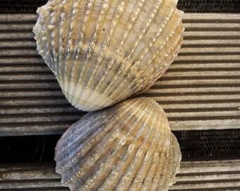 Sea shell seashell sand