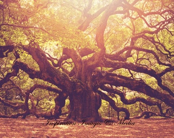 Angel Oak Tree of Charleston, SC