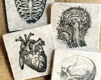 Doctor Gift- Doctor Decor, Doctor Graduation, Doctor Graduation Gift, Anatomy, Anatomy Art, Anatomy Gift, Anatomy Decor, Dr, Gift, Decor