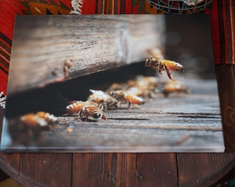 Coming in for landing, a beautiful 20X16 in. canvas printed photo of Honey Bees
