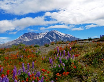 Mount Saint Helens with Wildflowers