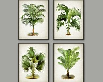 Palm Tree Botanical Wall Art Print Set of 4 - Modern Home Decor - Palm Tree Book Illustration Prints  -Palm Tree Botanical Prints - AB553