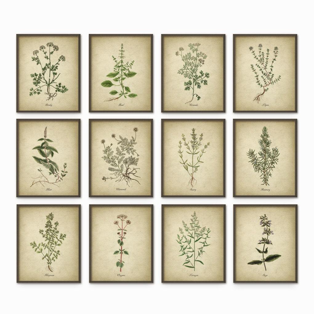 Kitchen Wall Art Herbs
