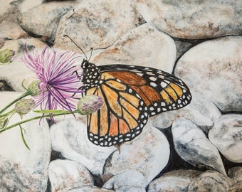 Monarch Butterfly,Insect,Symbol of Transformation,Butterfly,Migration,Wings,Flight, Beauty,Strength,Wild Flower, Beach Rocks