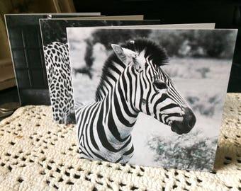 NOIR & blanc cartes de vœux - set de 6 (4 x 6 ou carré). Photos prises à partir autour du monde du zèbre, léopard, pingouin, bâtiment, texture