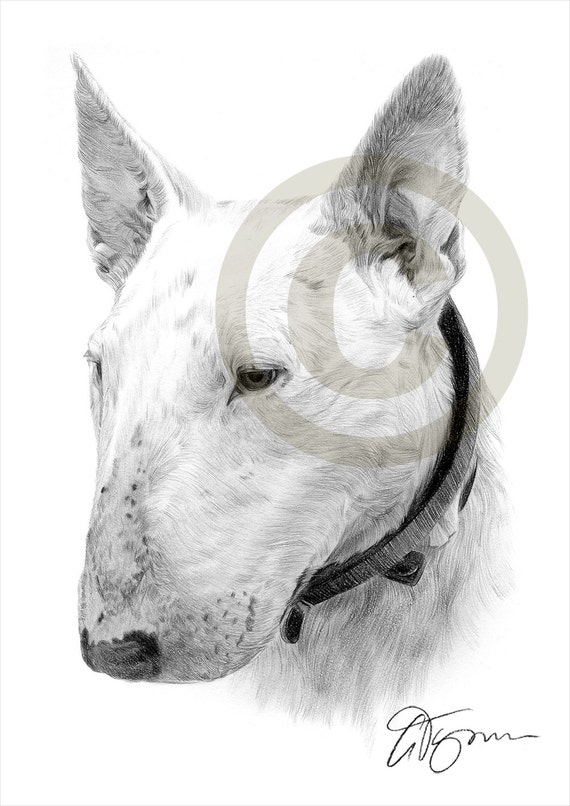 bull terrier artist dog english bull terrier pencil drawing print a4 size 6322