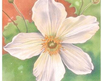 Flower Greetings Card - 'Wild Swan' Anemone