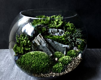 Bio-Bowl Terrarium with Organic Woodland Plants - Alternative Gift to Flowers