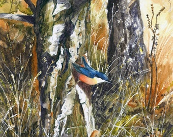 Nuthatch in Autumn woodland