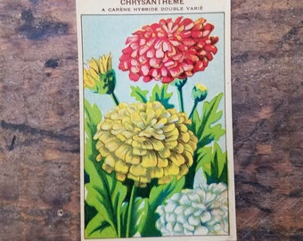 Original Vintage Flower Seed Label, Lithograph, French, Chrysanthemum, Old Stock