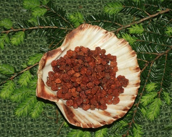 English Rowan Berries - Protection, Work with the Fey  - Spellwork or Charms - Pagan, Wicca, Witchcraft
