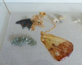 Imperial moth wing necklace, preserved moth wing, real moth wing, wing necklace, Imperial moth jewelry, insect wing jewelry