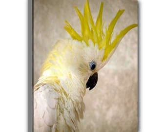 Eleanora Cockatoo Parrot Wrap Canvas Print 16x20 -- Ready to Hang!