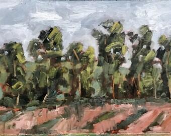CHERRY GLEN ROAD - 12 x 24 - Eucalyptus Trees - Plein Air - Painting - Original Oil - Landscape - Home Decor - California - Artwork - Artist