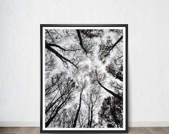 Tree and Sky Digital Print Poster , Art Print, Digital Art, Digital Art Print, Digital Artworks, Digital Print Art, Digital Art Download