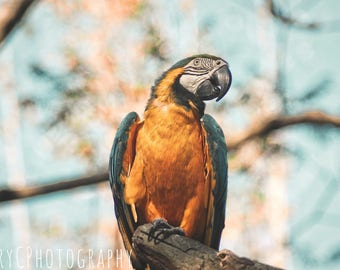 Blue bird Print (TerryCPhotography)