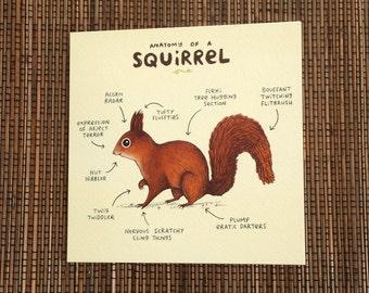 Anatomy Of A Squirrel Card
