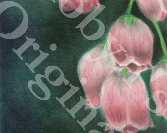 Pink Lily of the Valley Art Print