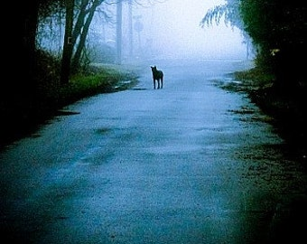To Grandma's House Fine Art Wolf Dog Werewolf Noir Photograph 6x9 Horror Fog Creepy Decor Mist Blue Woods Forest Fairytale Nightmare Dream