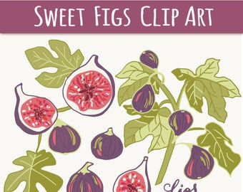 CLIP ART: Figs Botanical // Clipart Photoshop Brush // Hand Drawn Summer Fall Autumn // Fruit Tree Leaves // Vector Files // Commercial Use