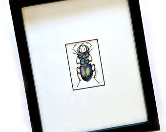 Beetle Art Original Drawing, Framed Beetle Ink and Watercolor Drawing, Framed Fancy Beetle Art, Original Watercolor Ink Drawing, Framed Art