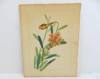 Vintage Theorem Asiatic Lily Salmon Peach Color B. Novak