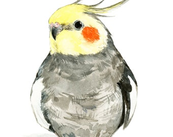 Cockatiel watercolor painting - bird watercolor painting - 5x7 inch print - 0036