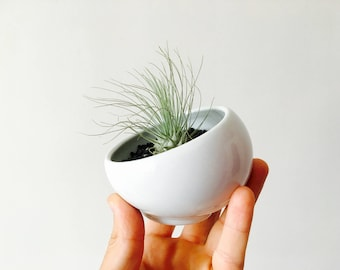 Terrarium, terrarium air plant terrarium kit, air plant holder, tillandsia, tillandsia support