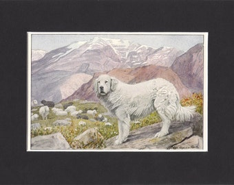 Pyrenean 1919 Dog Print by Louis Agassiz Fuertes Small Vintage Pyrenean Sheepdog Print Mounted with Mat Pyrenean Sheep Dog