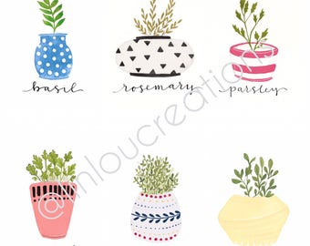 Culinary Herbs Sets of 3 and 6