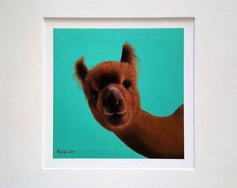 Mounted giclee print of original oil painting: alpaca