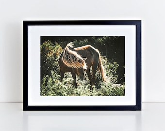 Wild Horse Photography, Horse Wall Art, Equine Print, Assateague Island, Horse Photo, Green, Sunset, Horse Picture, Wild Horse