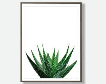 Tropical Print, Aloe Vera Photography, Large Poster, Tropical Artwork, Aloe Vera Wall Art, Aloe Vera Poster, Digital Download, Feliss-Art