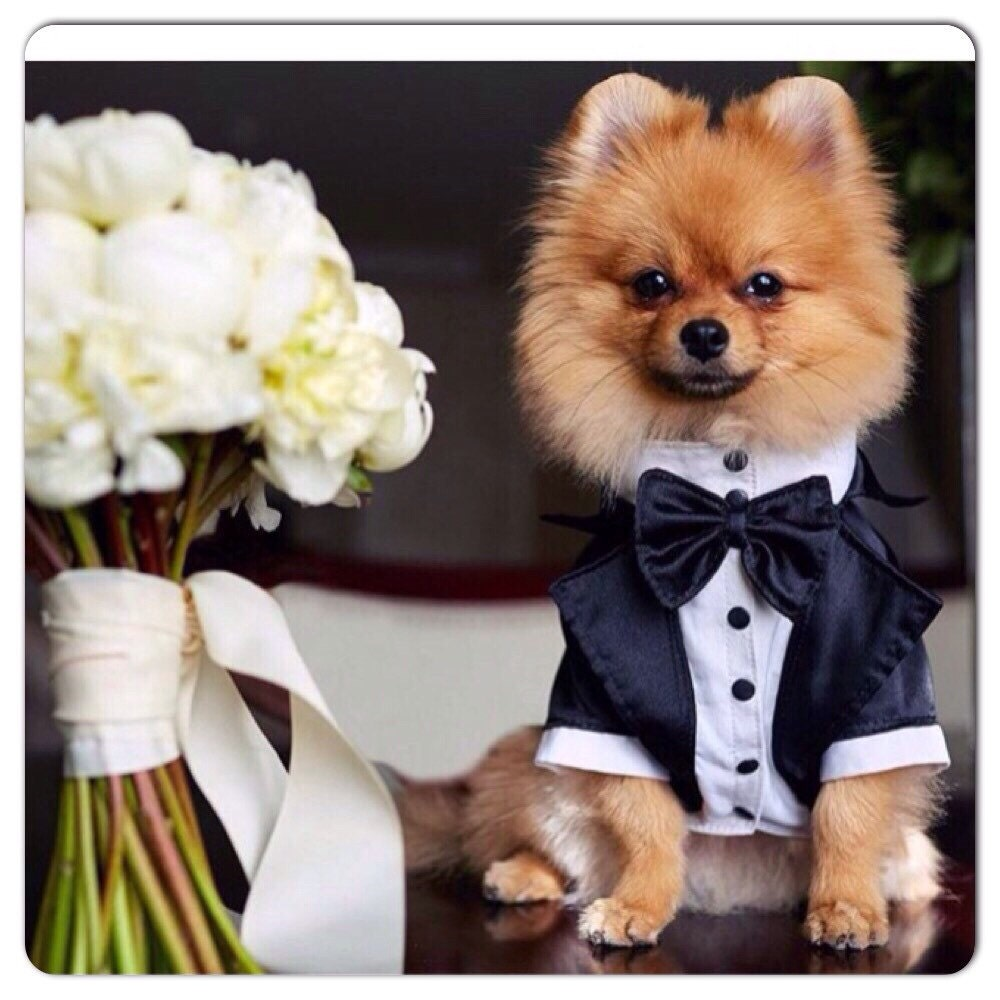 tuxedo for dogs Formal dog tuxedo Custom made dog suit