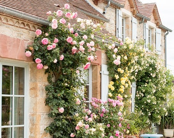 France Photography, Summer Home in the South of France, Martel, Summer, Roses, Nature, French Garden, Bathroom Art, French Wall Art
