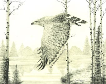 Limited Edition Fine Print of an original drawing of a Hawk