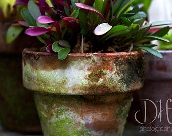 Vibrant Gardens - Nature Photography - Terra Cotta Pots - Plants - Digital