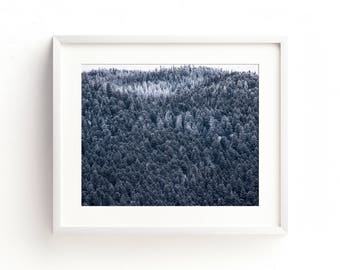"""landscape, forest, trees, wilderness, mountains, gray, large art, large wall art, canvas art, wall art canvas, nature print - """"Canyon Frost"""""""